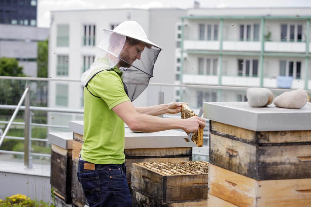 Bild einer Person, die an einem Bienenstock arbeitet
