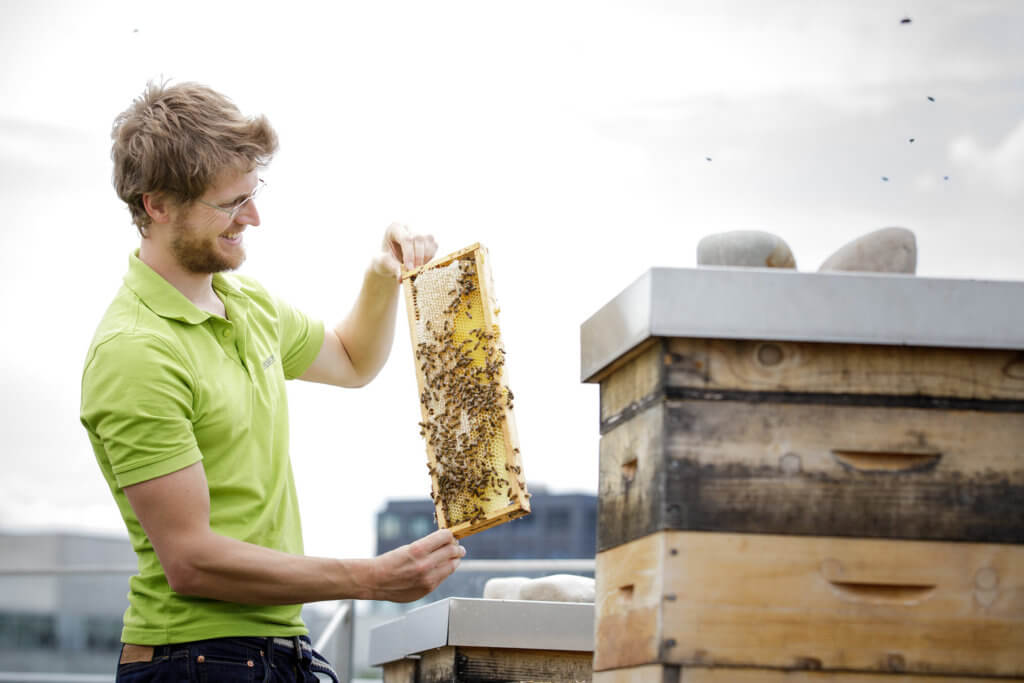 Bild einer Person mit einer Bienenwabe